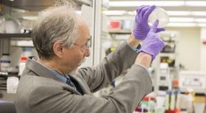 Jeff Boeke, con el cultivo de levaduras sintéticas. / nyu / science